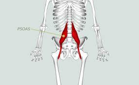 En iliaco psoas dolor musculo el